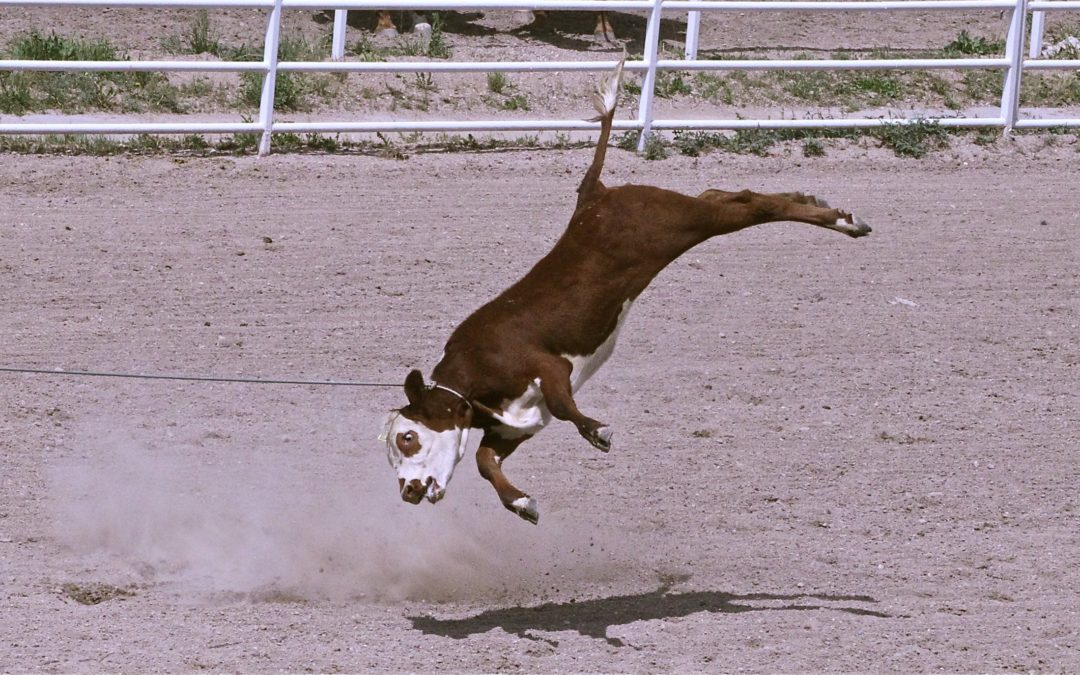 PRESS RELEASE: Anti-Cruelty Advocates Will Protest Cruelty to Animals at Days of '47 Rodeo