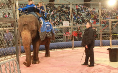 UARC Applauds Salt Lake County's Decision Disallowing Elephants and Tigers at Upcoming Circus; Urges Formal Ordinance