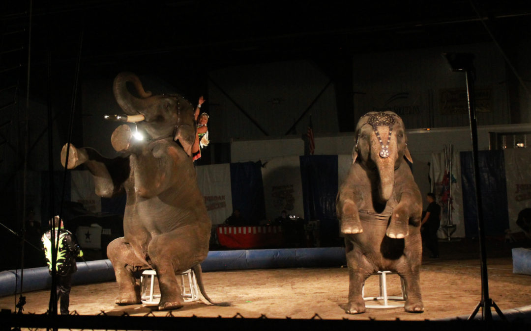 UARC Investigator Documents Animal Suffering at Jordan World Circus