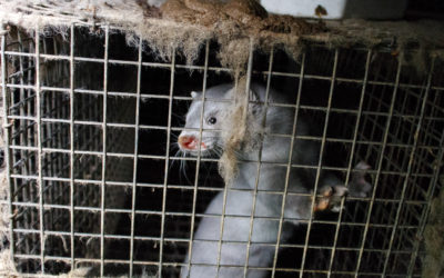 News Release: COVID-19 Infected Mink Stolen from Morgan Farm? State of Utah Battles to Keep Secret Information About Coronavirus on Mink Farms
