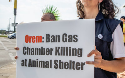 Victory! North Utah Valley Animal Shelter Will End Gas Chamber Killing